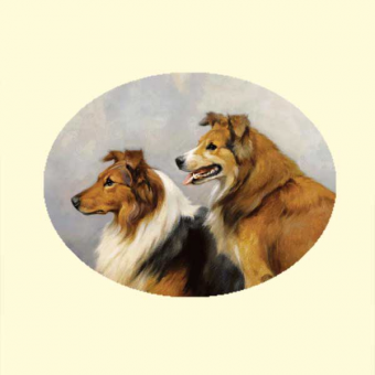 127.1 Collies (f) - pattern