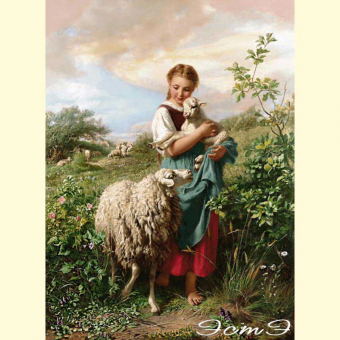 255 Little Shepherdess (l)