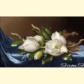 066  Giant Magnolias on a Blue Velvet Cloth