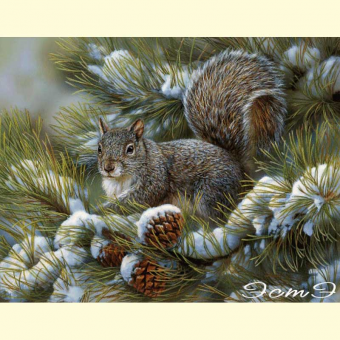 323 Gray Squirrel