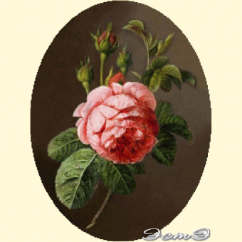 004 Rose (oval)